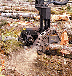 Timber Harvester in Action